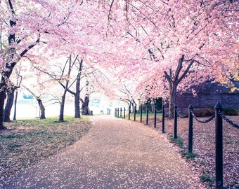 Cherry Blossom Festival Print - Washington DC Photo - Cherry Blossom Flowers - Professional Photography, Wall Art, Pink Flowers