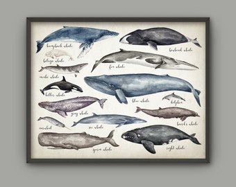 Whales Of The World Art Print, Watercolor Whale Painting, Educational Whale Comparison Chart, Whale Bathroom Decor, Bathroom Whales Art #893