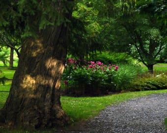 Photography of a tree in a park. Nature photography. Fine art photograph. Summer. Zen, peace.