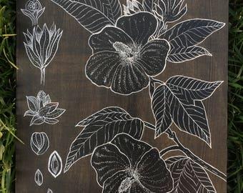 Sea Island Cotton - Gyssypium barbadense