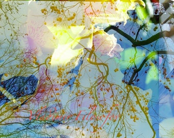 "Paris art photo ""Sun D ' fall"""