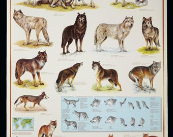 1993 Wolves Wolf Poster Vintage Canis Lupus