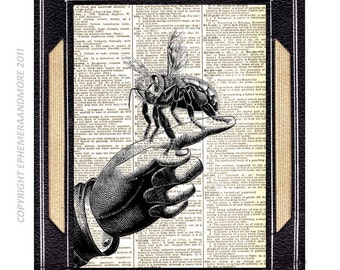 HONEY BEE on Finger art print Entomology Animal Zoology on upcycled vintage dictionary book page black white wall decor HoneyBee 8x10, 5x7