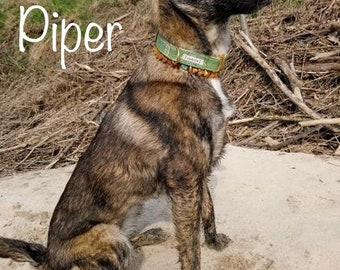 Dog collar, fresh SPEARMINT vegan, 2, 5 cm wide, various sizes, adjustable click lock 39.00 Euro