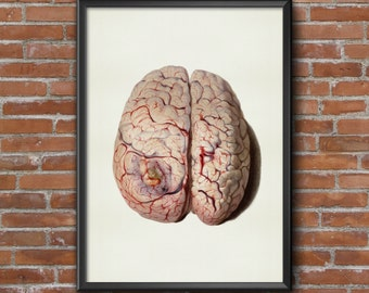 Old vintage Illustrations of human anatomy-Brain Anatomy-medical Prints