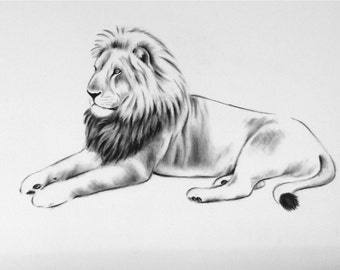 "Large Charcoal Lion Sketch, 18""x 24"" Lion Art, Laying Lion Drawing, Charcoal Drawing, Charcoal Sketch, African Art, Lion Laying Down"