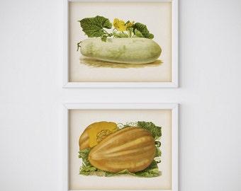 Vegetable print set, Pumpkin print, Marrow print, Kitchen digital print, Printable print, Instant download, Vegetable art, Vintage kitchen
