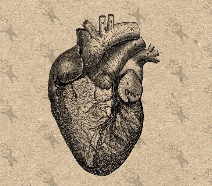 Vintage Anatomy Human Heart Antique Drawing Old Illustration