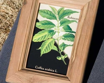 Apple wood picture frame accomodates 4 x 6 inch (standard postcard size) picture