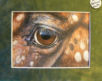 Appaloosa horse eye reproduction 5x7 giclee print in 8x10 mat equine art by Kerry Nelson