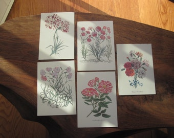 250 Reproduction Postcards of Antique Botanical Engravings Printed in Italy