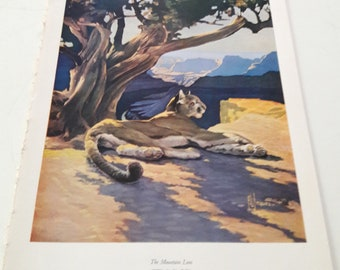 Vintage Book Plate, Mountain Lion, Francis Lee Jaques, mid-century Art Print, Animals Nature Wilderness, Rustic cabin lithograph, Lake house