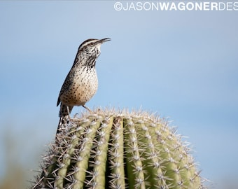 Cactus Wren - cactus - bird - desert - photography - photo - Digital Photo Download - Print at Home - Instant Download - Image File