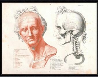 Anatomical Study of a Gladiator (No.1) antique reproduction print litecoin print anatomy print anatomy art vintage anatomy antique anatomy