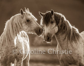 Horse photographs, wild horses. The Touch II