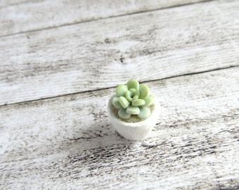 Aqua green Echeveria in white vase for dollhouse in 1:12 scale