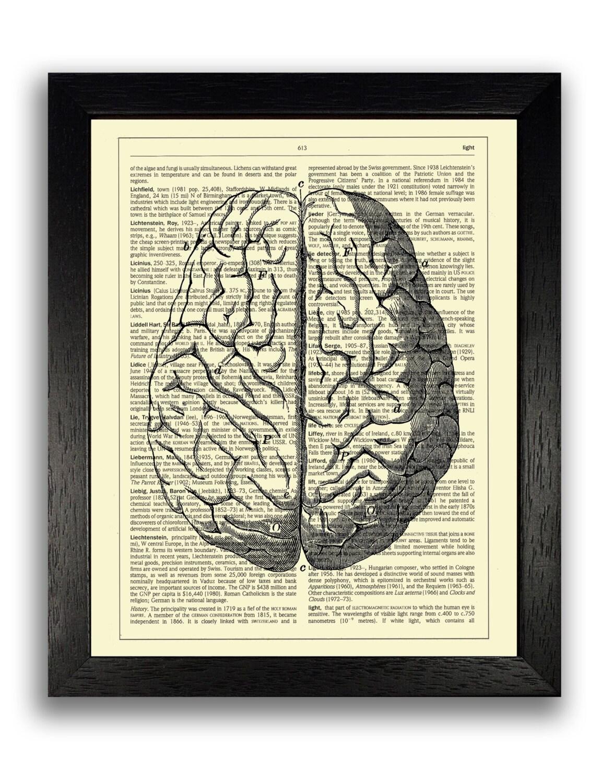Charmant Anatomie Des Gehirns Diagramm Galerie - Menschliche ...