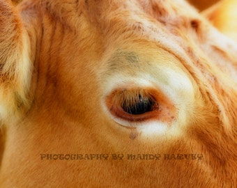 Mother Cow Watching Her Calf In Soft Focus, Close Up, Nature Photograph, Baby Animals, Nursery Picture, 9X6 Photograph, Home Decor
