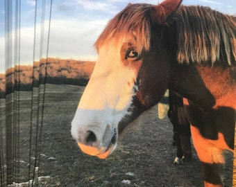 Pack of 10 Postcards: Horse