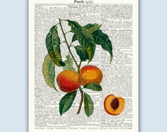 Peach Poster, Botanical Print, Fruit Art, Kitchen Art, Peach Art, Kitchen Print, Peach Decor, Kitchen Wall Art, Kitchen Wall Decor
