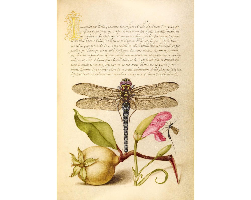 Dragonfly art print Dragonfly wall art Antique dragonfly