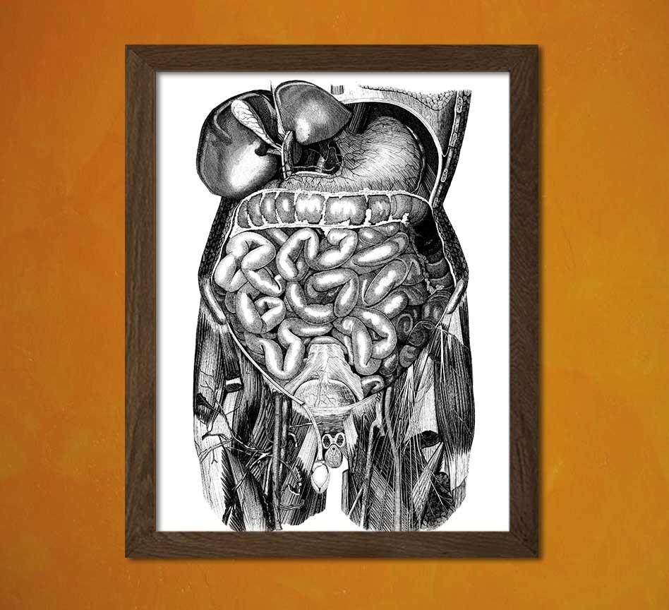 Vintage Anatomical Prints Medical Decor Human Anatomical