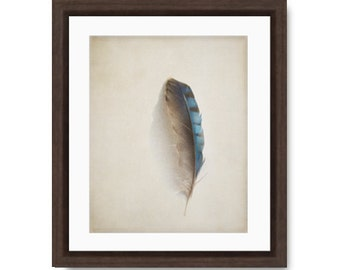 Modern Farmhouse Decor, Feather photo, blue jay feather print, nature photo, nature print, feather photography, feather art print,