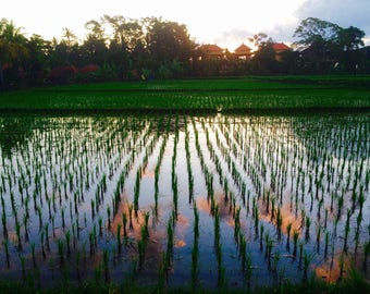 Clouds in a rice paddy
