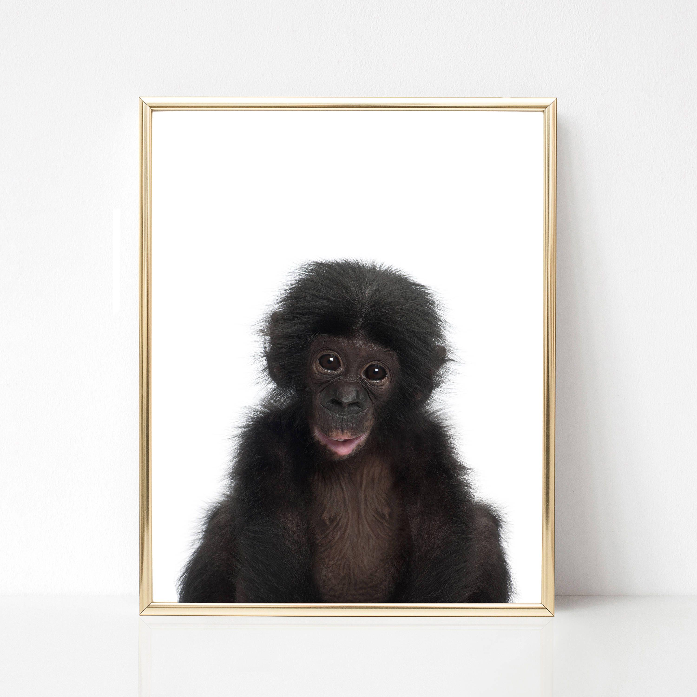 Charmant Hängenden Affen Vorlage Galerie - Entry Level Resume ...