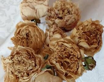 8 séché pivoines sur tiges pivoines vrai, séchés à l'Air naturellement Blush rosé couleur Beige-étaient à l'origine des rose ou blanc