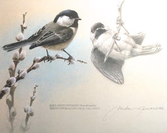 Black-Capped Chickadee Limited Edition Print by Michael Dumas