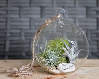 Coastal Air Plant Aerium Kit // Indoor Garden // terrarium, airplant, eco gift, natural home, living decor, airplant, tillandsia, plants