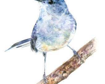 Blue-gray Gnatcatcher watercolor painting - bird watercolor painting - 5x7 inch print - 0059