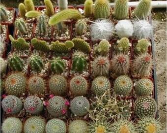 Cactus Seed Varieties Mix