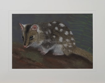 Eastern Quoll Greeting Card