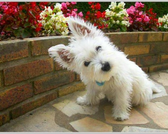 4 Dog Puppy West Highland Terrier 2 Dogs Puppies Greeting Notecards/ Envelopes Set