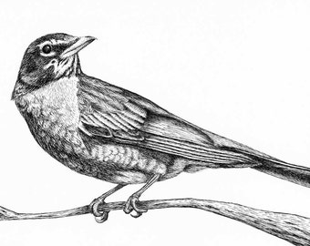 Robin Drawing, Pen and Ink, Bird Art, Bird Drawing on Paper, Woodland Decor