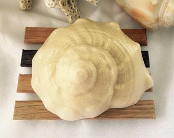 Conch Shell Soap - Seashell Soap - Beach Soap - Shell Soap
