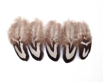 5 pheasant feathers revered black and white