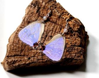 Real Butterfly Earrings, Morpho Sulkowski, Pale Purple Butterfly, Butterfly Earrings