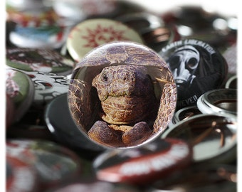 Desert Tortoise Button