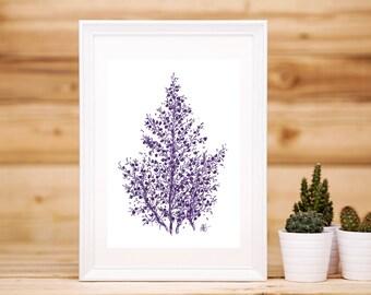 Purple Waxflower Print