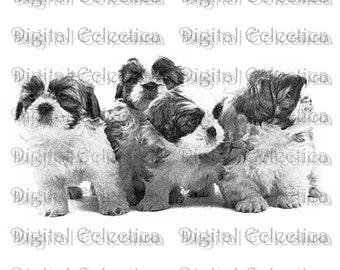 Shih Tzu Dogs. Shih Tzu PNG. Dog PNG. Shih Tzu Prints. Shih Tzu Images. Shih Tzu Pictures. Shih Tzu Art Clipart. Shih Tzu Drawing. No. 0014.