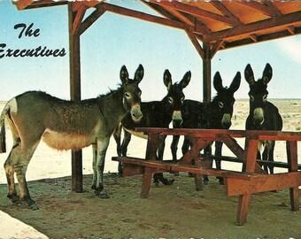 Vintage 1960s Postcard My Boss is a Jackass Donkey Executive Board of Directors Cute Animal Petley Studios Photochrome Era Postally Unused