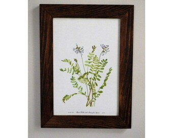 Framed Vintage 1950's Botanical Print