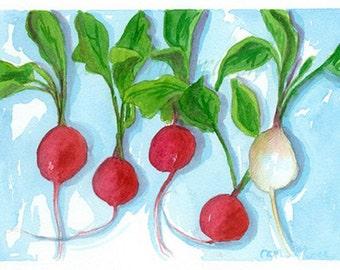 Radish Vegetables Original Watercolor Painting Kitchen Art