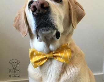 Yellow ZigZag Bow Tie and Collar