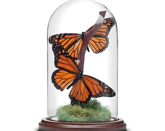 Monarch Butterflies in Bell Jar