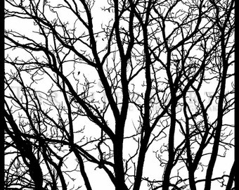 Tree Silhouette, Tree Photography, winter tree, Bare tree Photograph print