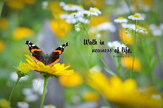 Walk In Newness Of Life Scripture Print Or Canvas Romans 4 5